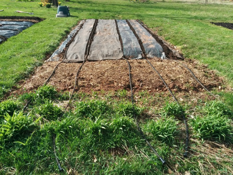 garden #2 is ready