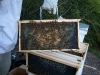 Anaheim hive, frame 4