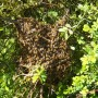 Third swarm of the spring