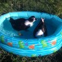 Ducks in their pool