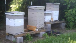 Hives in middle of June