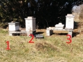Three-hives-numbered