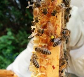 Hive 4 queen